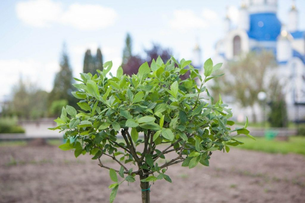 В СНАУ продовжують створювати «Сад пізнання»